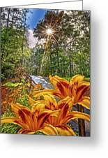 Lily Trail Greeting Card