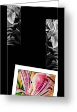 Lily Wall Decor Greeting Card