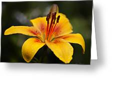 Lily Was Here Greeting Card
