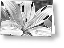 Lily White - Bw Greeting Card