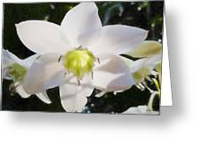 Lily White Greeting Card