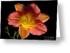 Lily With Bug Greeting Card