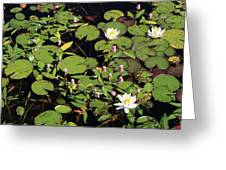 Lily Worlds Two Greeting Card