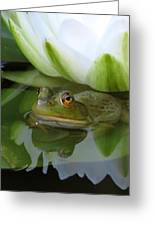 Lilyfrog - Frog With Water Lily Greeting Card