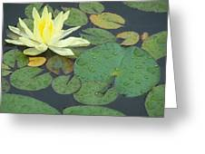 Lilypad Greeting Card