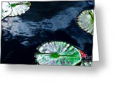 Lilypads And Sky Reflections Greeting Card