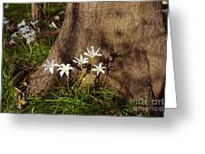 Lily's Atamasco Greeting Card