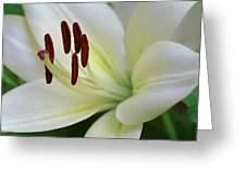 Lilywhite Greeting Card