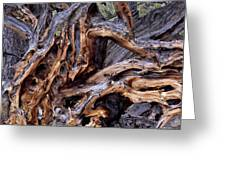 Limber Pine Roots Greeting Card