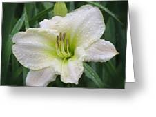 Lime Frost - Daylily Greeting Card