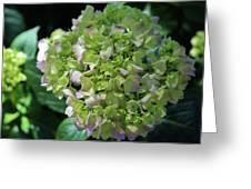 Lime-green Hydrangea Greeting Card