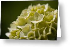 Lime Hydrangea Greeting Card