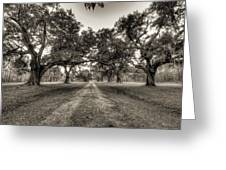 Limerick Plantation Live Oaks Greeting Card