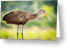 Limpkin At Celery Fields Greeting Card