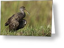 Limpkin Stretching In The Grass Greeting Card