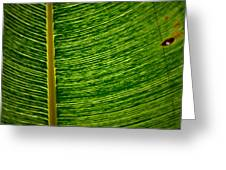Lincoln Park Conservatory Palm Greeting Card