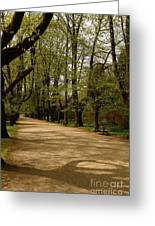 Linden Tree Alley Greeting Card