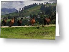 Line-dancing Llamas At Ingapirca Greeting Card