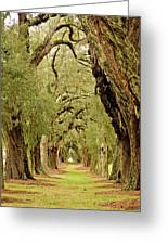 Line Of Oak Trees To Distance Greeting Card