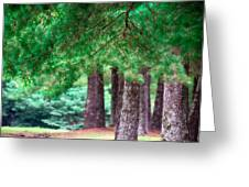 Line Of Pines Greeting Card