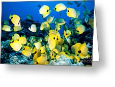 Lined Butterflyfish Greeting Card