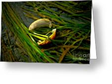 Linguini With Clams Greeting Card