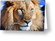 Lion 09 Greeting Card
