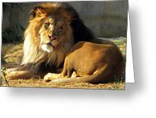 Lion 2 Washington D.c. National Zoo Greeting Card