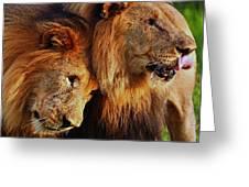 Lion 22 Greeting Card