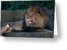 Lion 3 Greeting Card
