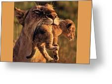Lion 32 Greeting Card