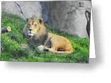 Lion At Leisure Greeting Card