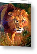 Lion At Sunset Greeting Card