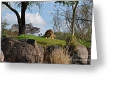 Lion Country Greeting Card