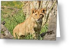 Lion Cub 2 Greeting Card