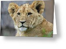 Lion Cub Close Up Greeting Card