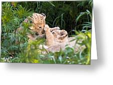 Lion Cubs At Play Greeting Card