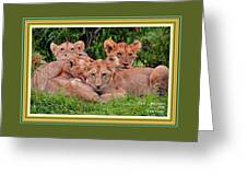 Lion Cubs. L A With Decorative Ornate Printed Frame. Greeting Card