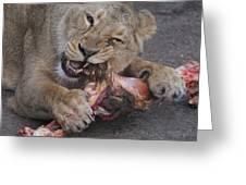 Lion Eating Greeting Card