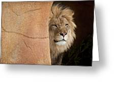 Lion Emerging    Captive Greeting Card