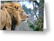 Lion In Thought Greeting Card
