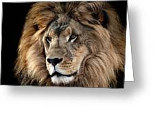 Lion King Of The Jungle 2 Greeting Card by James Sage