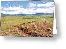 Lion Landscape Greeting Card