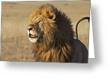 Lion Looks To Sky Greeting Card