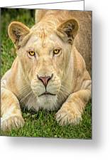 Lion Nature Wear Greeting Card