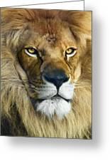 Lion Of Judah II Greeting Card
