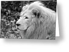 Lion Oh My Greeting Card