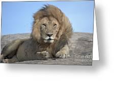Lion On Mound Greeting Card