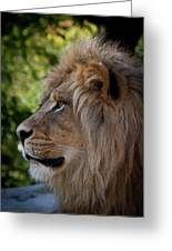 Lion Portrait Of A Leader Greeting Card