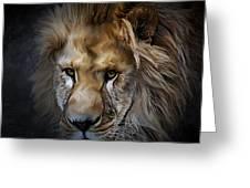 Lion Portraits 0055 Greeting Card